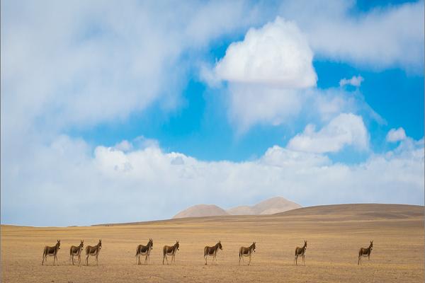 天津沙漠旅游景点